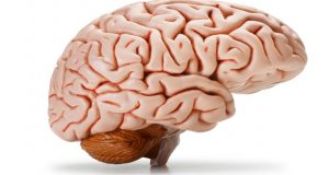 People with brain disorders appealed to donate their brains