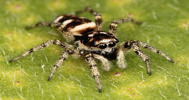 Spiders top the global predator charts
