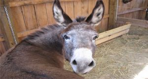 Case against youth over slapping donkey