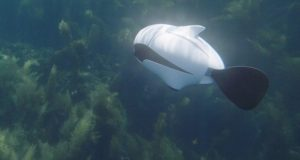 China develops World's first drone fish