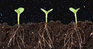 Chinese Scientists Plan to Grow Potatoes on Moon