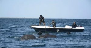 Sri Lankan Navy Timely Rescues Two Elephant from Sea