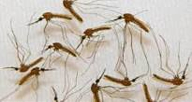 Scientists Find Super Malaria Spreading in South East Asia