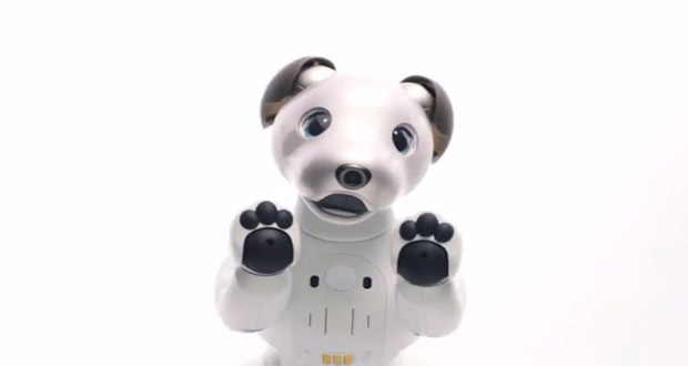 Aibo Is an Adorable,Intelligent Puppy