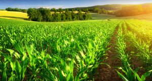 New Strategies Set To Improve Agriculture In Balochistan