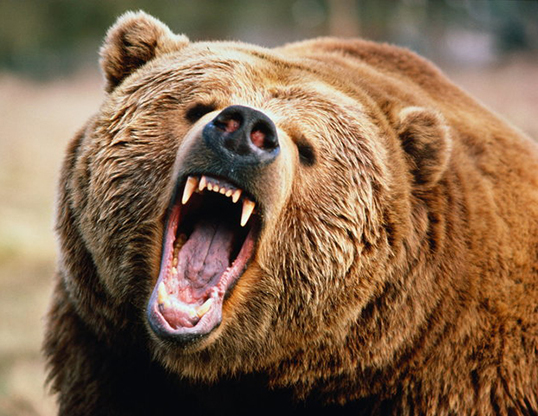 Man Mauled To Death While Trying To Take Selfie With Bear