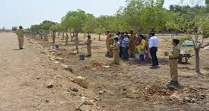 Sindh Scouts Starts Afforestation Campaign
