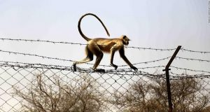 Monkey Kills A 12-Day-Old Baby In India